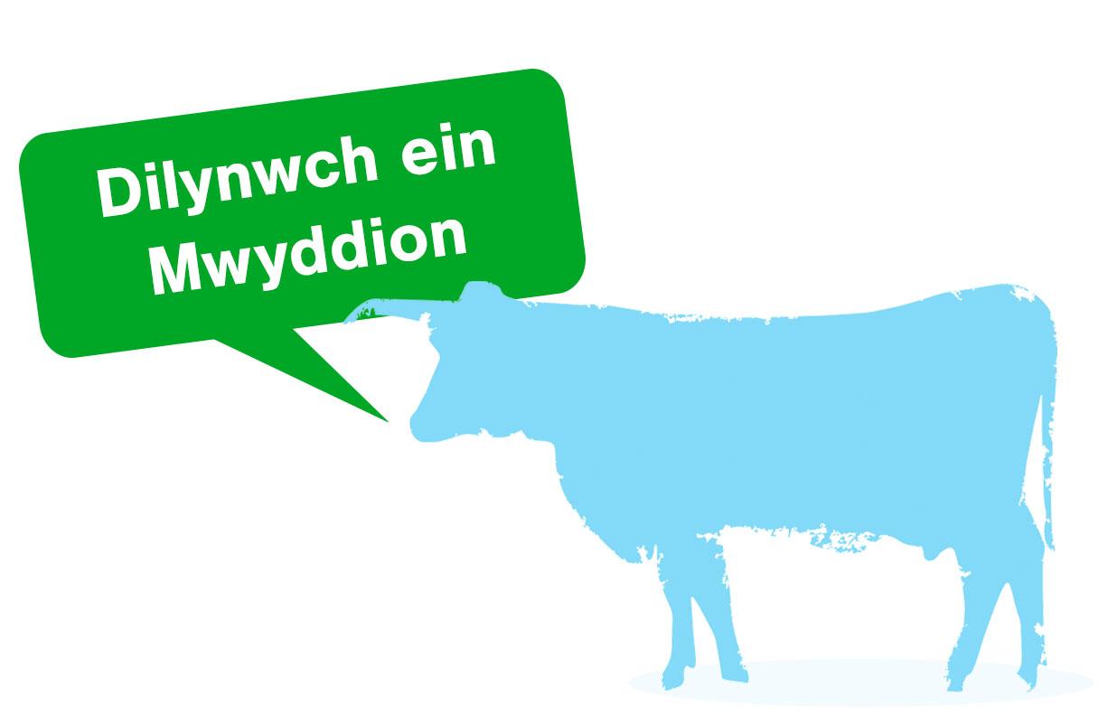 cow-latest-moos